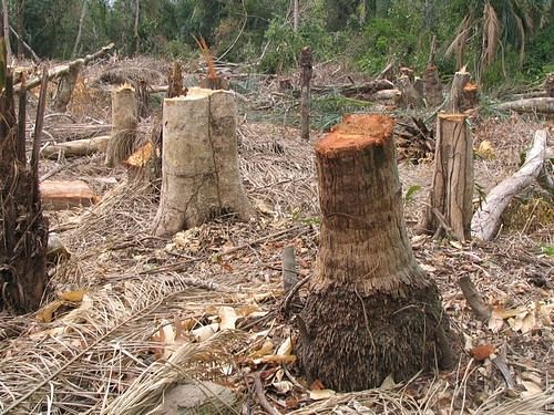Rejuvenation of Forest Land