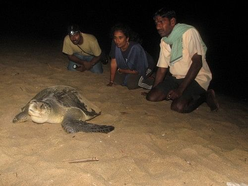 Members of Supraja Dharini's protection group keeps an eye on a nesting turtle. (Credit: Hema Vijay\WFS)