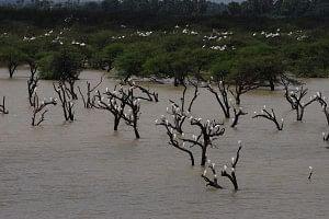Koonthakulam wetland