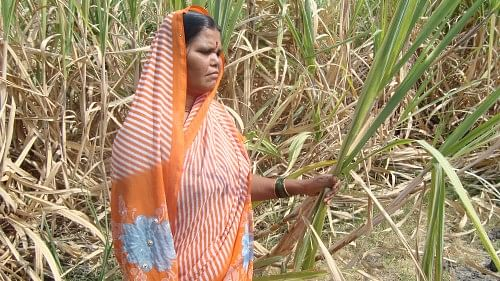 Thanks to the Women Open School's that are being run in six villages in Aurangabad women like Kantabai now have the confidence to interact with other farmers.(Credit: Nitin Jugran Bahuguna\WFS)