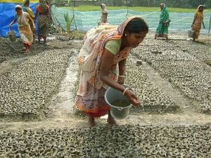 The mangrove nursery project has emerged as another successful means of livelihood for the women in the Basanti block. (Credit: Jayanta Pal\WFS)