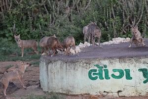 The Jackals of Kala Dungar