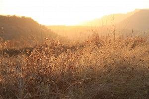 Sun setting on the fields