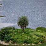 The same island on Puttenahalli Lake in Aug 2011