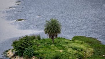 The same island on Puttenahalli Lake in Aug 2011