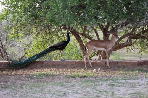 The animals live in close proximity to each other and to the humans