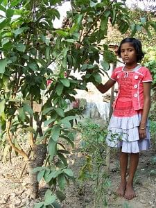 The daughters of Dharhara are treated as avatars of Goddess Lakshmi and inherit the fruit trees as they grow up.