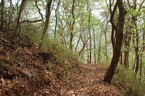 The carpeted trail at Bondla