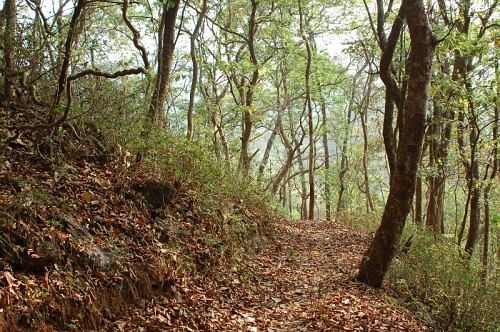 The carpeted trail at Bondla