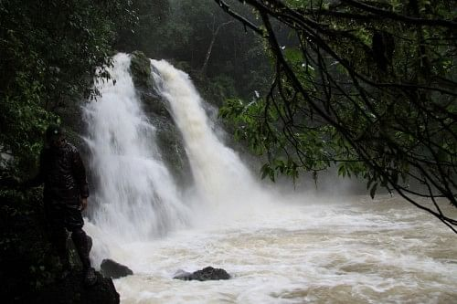 The magnificent Onakke Abbe falls, which drop from a height of 300m into the mist below.