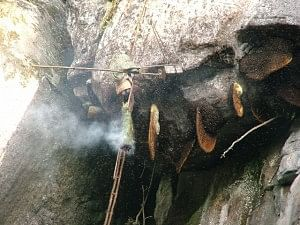 Collecting honey, smoking out the bees