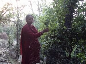 Collecting fodder and firewood to keep the household running would once take four hours of Sunita Arya's time every day. Today, remarkably this resident of Guna village in Uttarakahnd's Almora district spends just half-an-hour on the same chores. (Credit: Taarika Chugh\WFS)