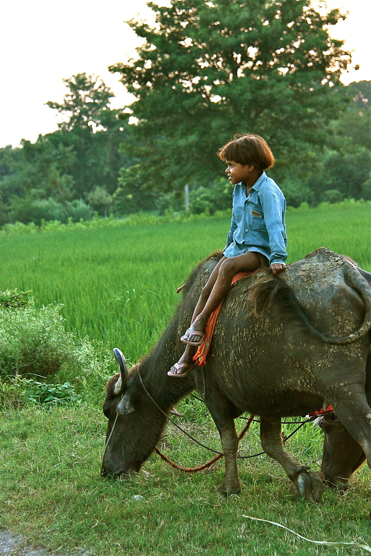 Girl atop buffalo in the evening light