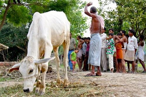 A Village Affair: Building the Grids