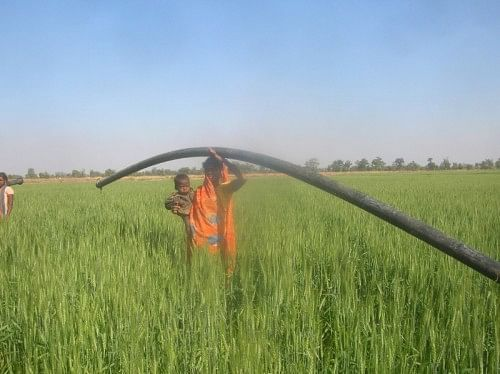 After a protracted struggle for freedom from bonded labour, the Sahariyas of Baran are finally reaping their harvest.