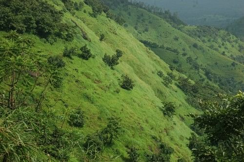 The verdant slopes of Koyna sanctuary