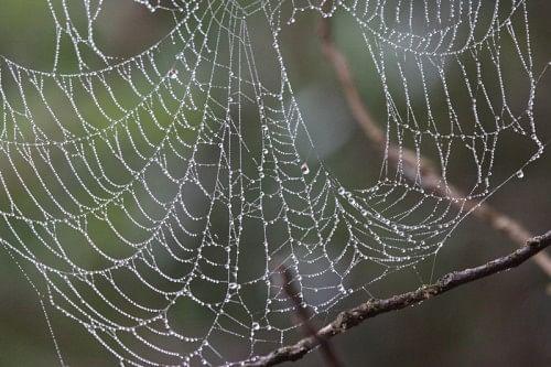 A web of dewdrops
