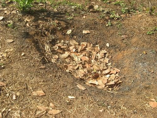 Mulching pit at AR Farms, Heroor village, Kundapur, Udupi district