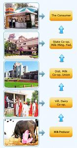 Amul Distribution Model