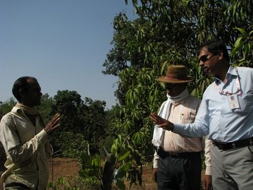 The cashew grafting programme