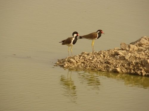 Migratory birds flock to the campus site in plenty, and are seen cooling off in the many lakes