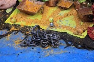 Entwined snake gods.