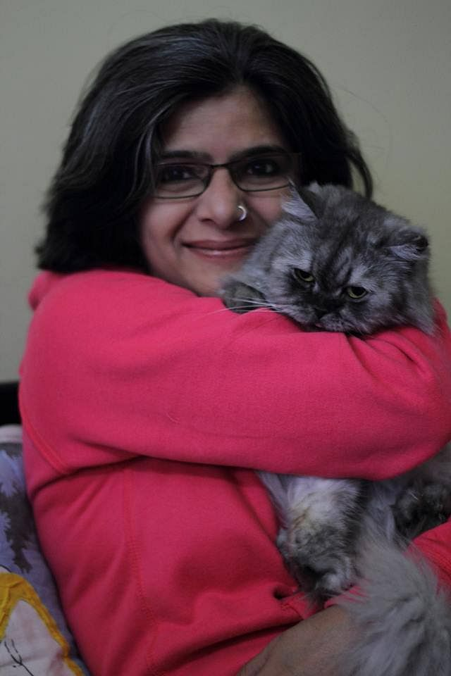 Persian cat adoption delhi