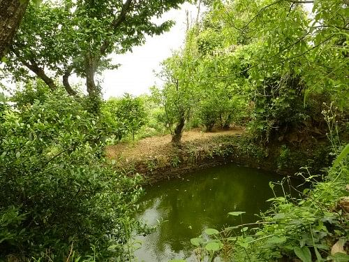 irrigation tank on the Gunavante's farm