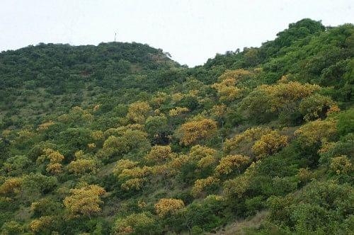 The rejuvenated green slopes of Sagareshwar