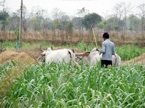 Farmer of Jambhora gram panchayat
