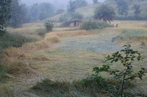 Mist descending on a farmland in Walvanda