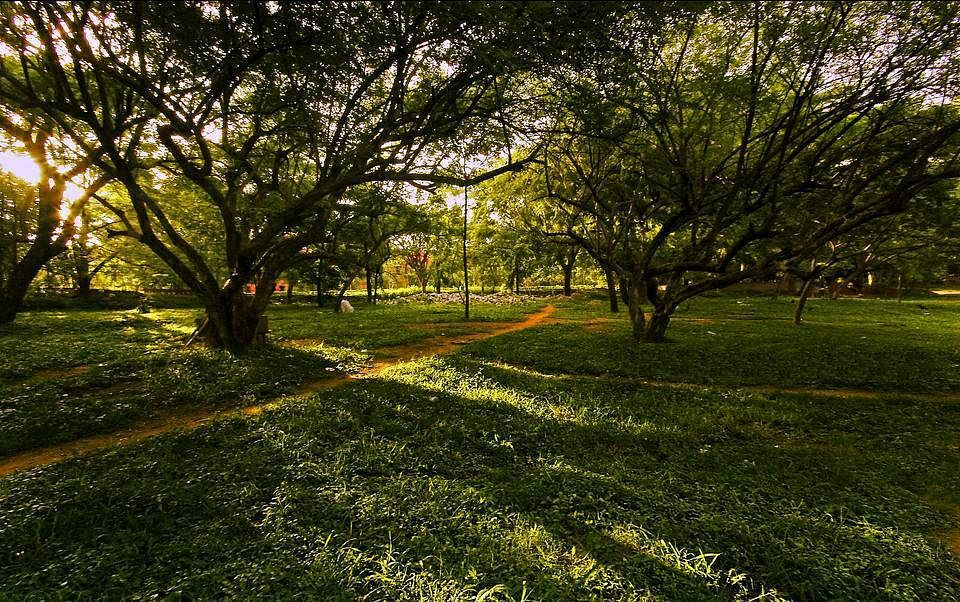 Cubbon-Park,-Bangalore,-India