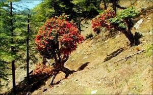 Trails of Kalap