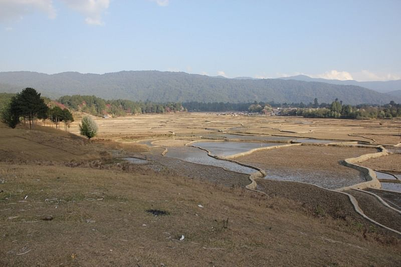 Ziro Valley post winter harvest