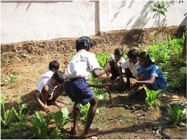 School vegetable garden.