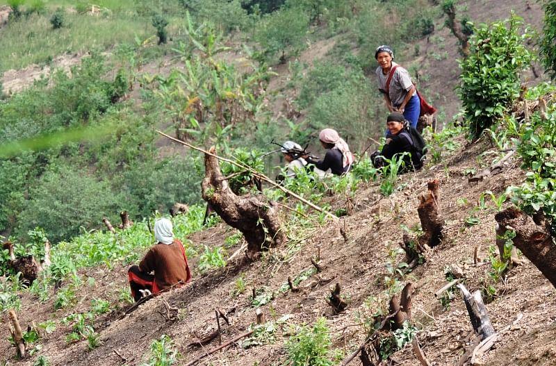 jhum farming in Nagaland