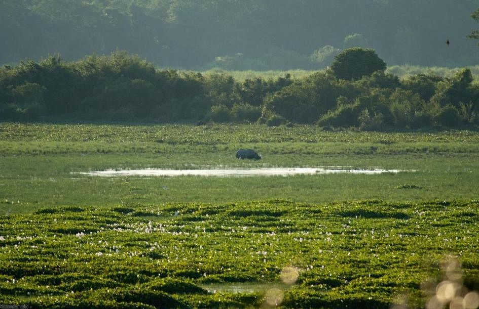 Can A Flood Be Beneficial? Yes, When It's At The Kaziranga National Park At Assam!