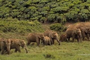 elephant video2