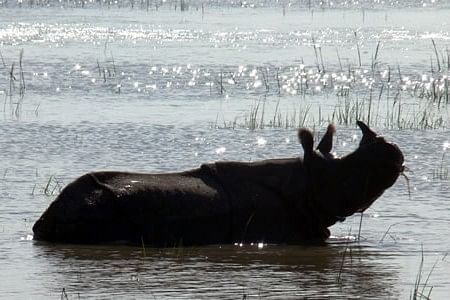 Rhino enjoying the water.