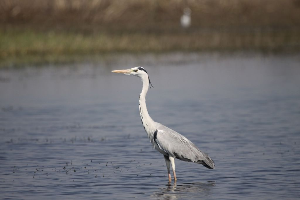 Two Beautiful Bird Sanctuaries In India That Pay Tribute To The Undying Love Of Dr. Salim Ali