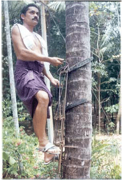 Tree climber designed by Appachan.