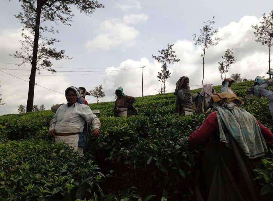 BBTC tea estate, women empowerment