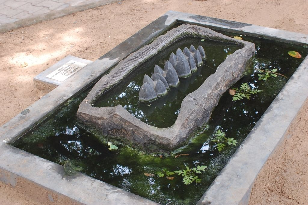 Cholamandal: an organic sculpture