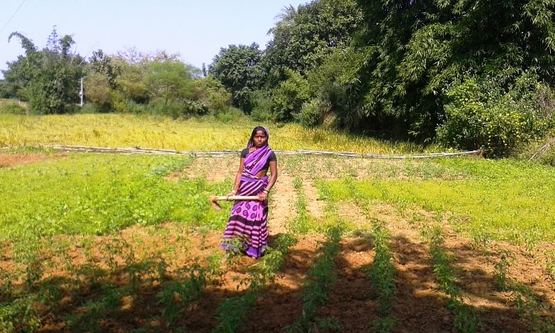 More than 300 farmers in Deoghar district, Jharkhand, have been trained in Sustainable Integrated Farming Systems (SIFS). Jaimala Devi, 36, whose family has a 40 decimal farmland has greatly benefitted from this knowledge gained from the local farmers club. (Saadia Azim\ WFS)