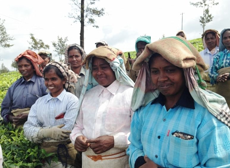 BBTC Tea Factory, women