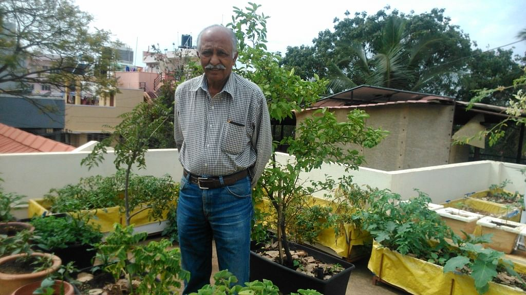 Dr. Vishwanath in his terrace garden