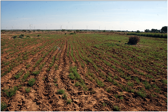 Khadin system does not require any irrigation.