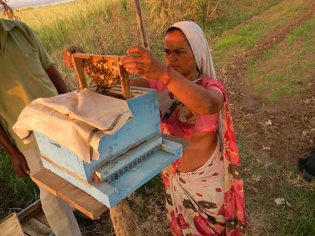 Shardatai, a farmer, too handles bees with expertise.