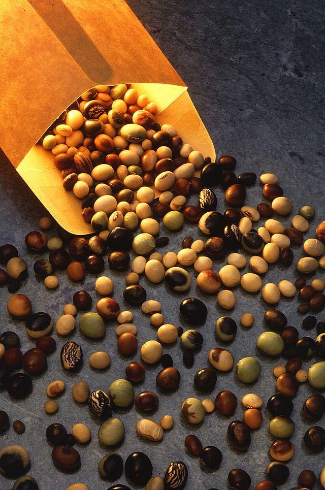 Soybeanvarieties