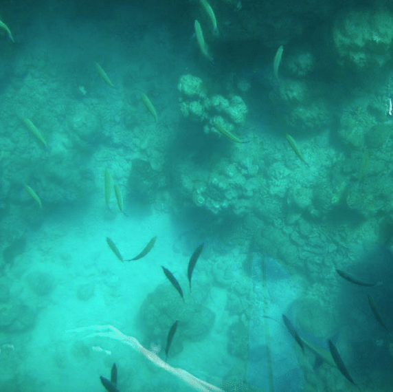 Undersea life at Havelock island